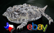 Will new Teaxas auction laws prove to be a thorny issue for ebaY and it's sellers?